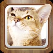 Cat Wallpapers HD Retina 640*960