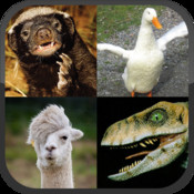 Llama or Duck or Honey Badger or Raptor?