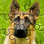 Dog Puzzles for iPad kids online puzzles