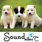 Animal Unique Sound Board