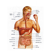 Gastroenterology Comprehensive Review Course Board Review Gastroenterology and Hepatology rss reader review