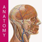 Best Human Anatomy