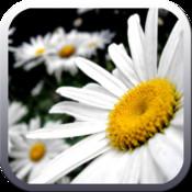 Medicinal Plants Wiki