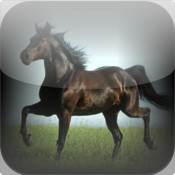 Horse Breeds Encyclopedia