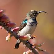 Animal Explorer Free: Sounds and Photos