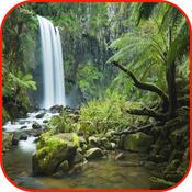 Rainforest Wallpaper & Rainforest Sounds & Rainforest Info puzzles