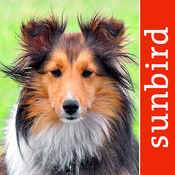 Dog Id – select my dog, a comprehensive guide for choosing the right dogs breed