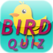 Bird Quiz fun game