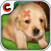 cute puppy doctor