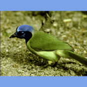 ScienceBirdsFactsQuiz mad birds pursuit