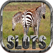 Best Zebra Serie Slots Machine - FREE Casino Machine For Test Your Lucky