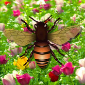 Chaing Bees