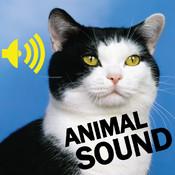Animal Amazing Sound Effect