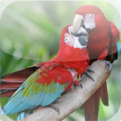 Parrots Encyclopedia