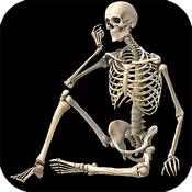 Anatomy Tutorial: Skeletal System - Human Anatomy Dictionary