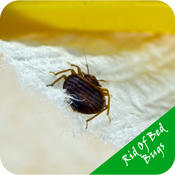 Getting Rid Of Bed Bugs - Pest-free Home