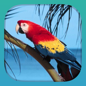 RelaxBook Birds - Sleep sounds for you to relax with tropical birds and canaries mad birds pursuit