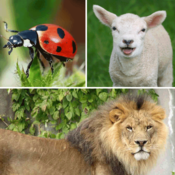 Guess the Animals Quiz - What`s the creature from the jungle, farm, sea, and air in the pic?