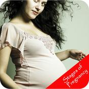 Stages Of Pregnancy - Week by Week
