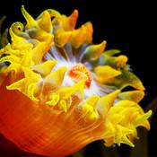 Encyclopedia of Sea Anemones