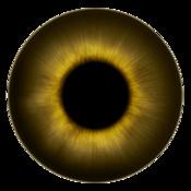 Bull Eye